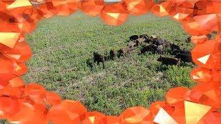 Охота на кабана в Башкирии