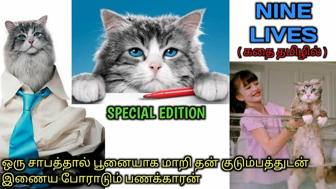 Download ஒரு பணக்காரனின் பூனை வாழ்கை |Tamil voice over| AAJUNN YARO | Hollywood movie Story & Review in Tamil