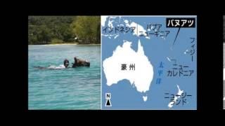 バヌアツで水中乗馬を楽しむ バヌアツで乗馬するときは水着着用で・・・...