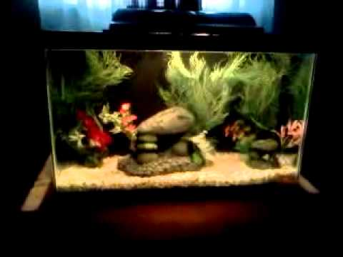 Fish tank aquarium diy projects do it you cheap h youtube for H m fish count