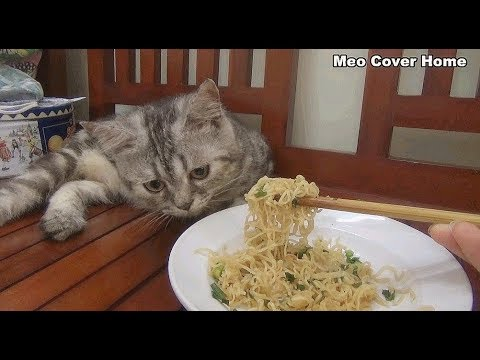 Cat Look At Me Eating Noodle So Yummy | Funny Cat Vines 2018