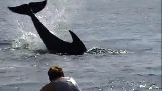 Angry dolphin caught attacking people