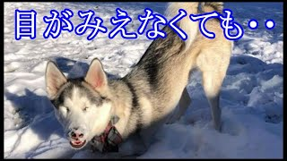 「かわいそう・・・。」幼い頃に盲目となってしまった犬。それでも前向きに生きる犬が初めて体験したある事に大興奮!【元気をもらえる話】