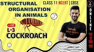 Morphology of Cockroach | Structural Organization in Animals | 11th Biology | NEET Biology|NEET 2020