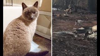 Выжившая на пожаре кошка месяц ждала хозяев у сгоревшего дома, и вот что произошло дальше