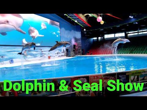 Dolphin and Seal Show   Dubai Dolphinarium   Creek Park