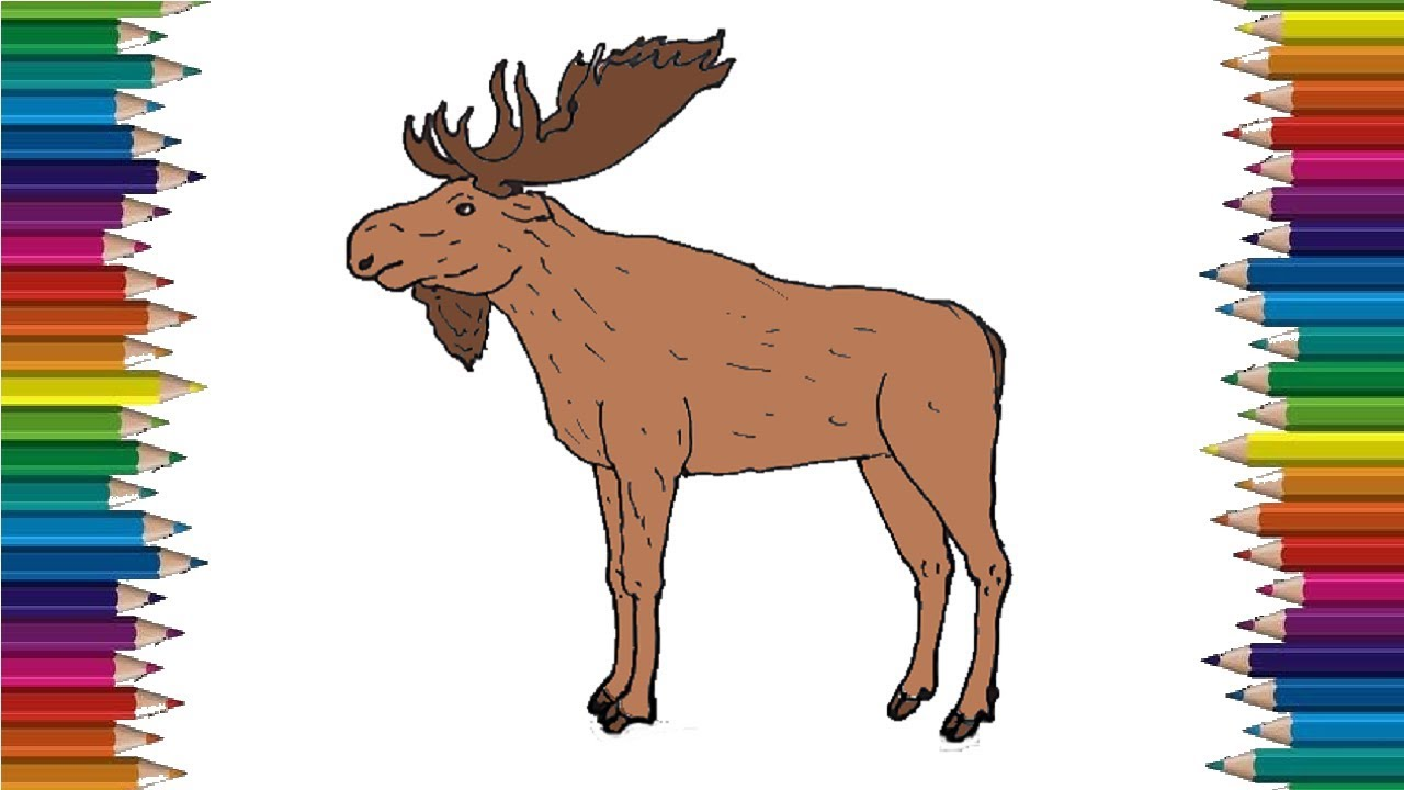 How to Draw a Moose step by step easy - Easy animals to ...