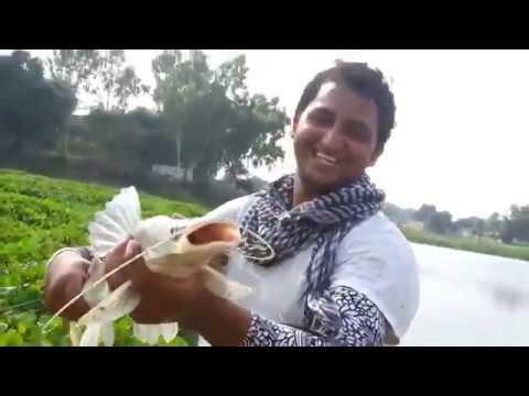 Amazing fishing in pakistan at SATLUJ river by NADEEM KHAN