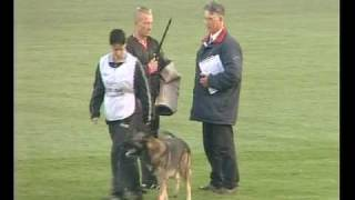 Schutzhund World Championship Wusv October 2009-german Shepherd Dog Training Equipment