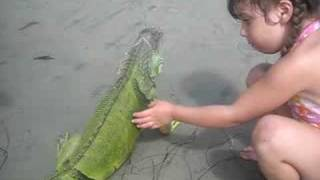 Iguana beach encounter
