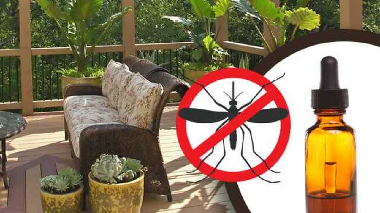 Home Remedies - How to Keep Mosquitoes Away Naturally