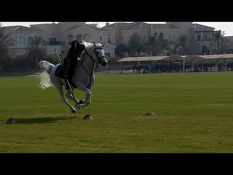 Tentpegging By Dubai Mounted Police | Commemoration Day Cup 2019 – UAE National Day
