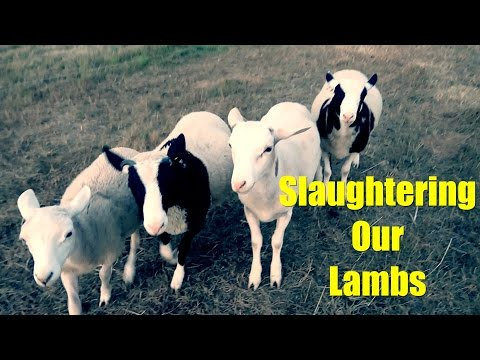 Slaughtering Our Lambs