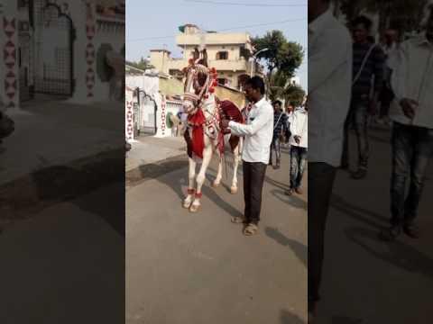 Nagpur ka Raja horses 2017