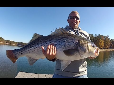 Dock Fishing For Trophy Striped Bass