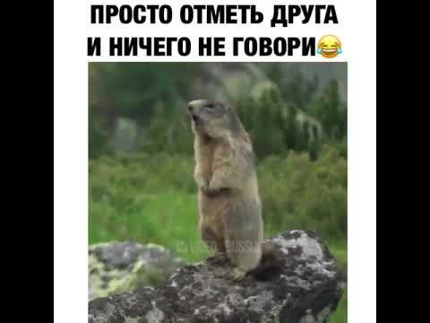 Видео Приколы Юмор Фэйлы Смех Ржака Fail Funny Vines 197