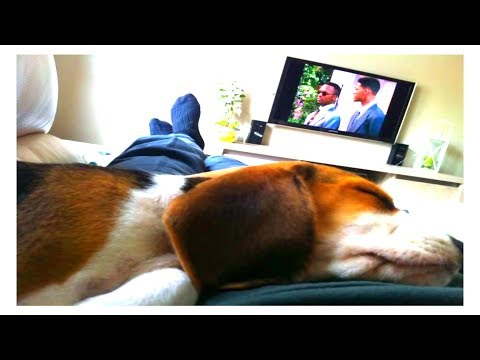 Waking up my beagle