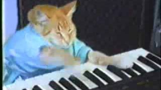 Keyboard Cat Win W/ FREE RINGTONE