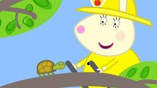 Peppa Wutz | Dr. Hamsters Schildkröte | Peppa Pig Deutsch Neue Folgen | Cartoons für Kinder