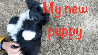 My new puppy  Portuguese water dog