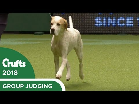 Gundog Group Judging | Crufts 2018