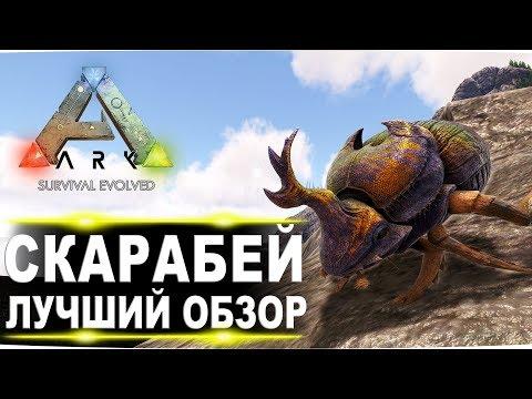 Скарабей (Dung Beetle) в АРК. Лучший обзор: приручение и способности жуков в Ark