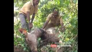 Culprits arrested for hunting wild animal in Idukki | FIR 27 November