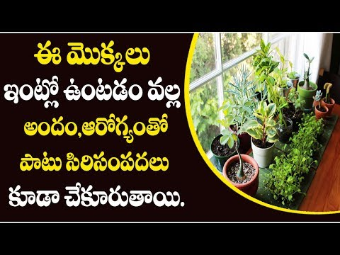 These Plants Will give Health and Wealth - Mana Arogyam Telugu Health Tips