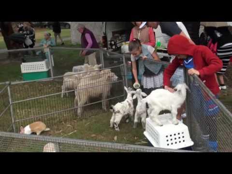 The Great Lag Baomer Parade Sydney Australia 5777 2017