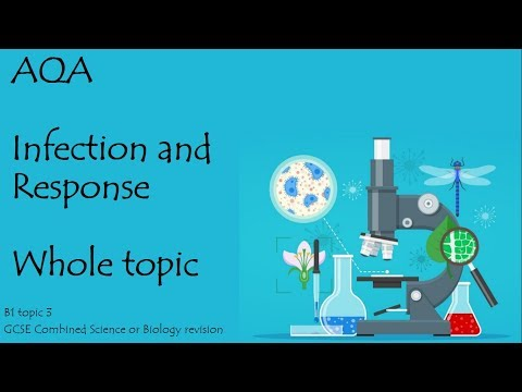 The whole of INFECTION AND RESPONSE. AQA 9-1 GCSE Biology or combined science for paper 1