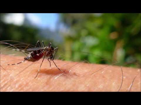 Mosquito sound and noise repellent 11 8 kHz, probably effective against Zika virus   12 hours