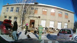 """Приют для 550 собак """"Доброта"""" г.Уфа"""