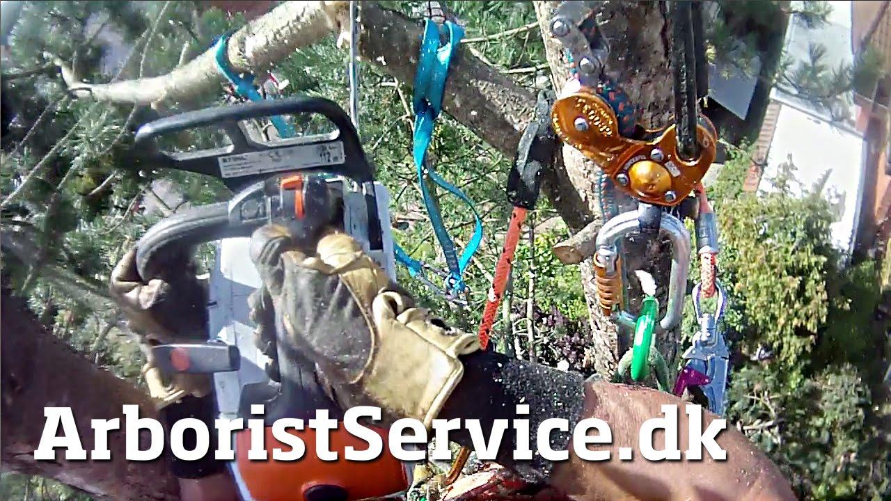 Rigging Got The Day Off Tree Climbing Arborist Petzl