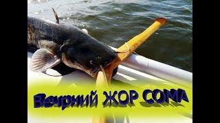 Клев рыбы / Рыбалка 2019 / Ловля сома / Сом / Квок