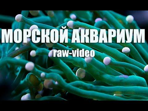 5 дн. Назад. Объявление раздела животные. Аквариум juwel korall 60 (германия) + оборудование купить, продать или отдать в липецкой области на avito.