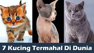Mahal Banget Inilah 7 Jenis Kucing Termahal Di Dunia Harganya Setara Rumah Mewah Youtube