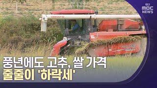 [대구MBC뉴스] 풍년에도 고추, 쌀 가격 줄줄이 '하락세'