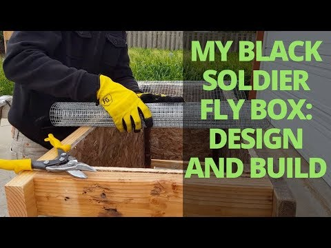 How I Built And Designed My Black Soldier Fly Larvae Box