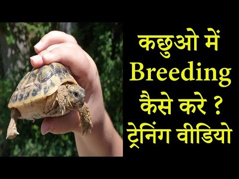कछुए में ब्रीडिंग कैसे करे - Turtle - Tortoise Breeding || Dr Nagender Yadav