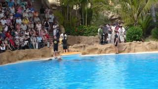 Loro Parque Dolphin Show (HD)
