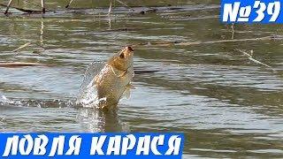 Ловля Карася в Заросшем Пруду на Удочку. Карась на поплавок Весной