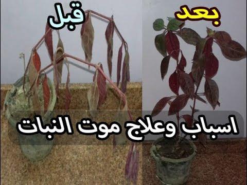 أسباب وعلاج موت النباتات المنزلية Youtube