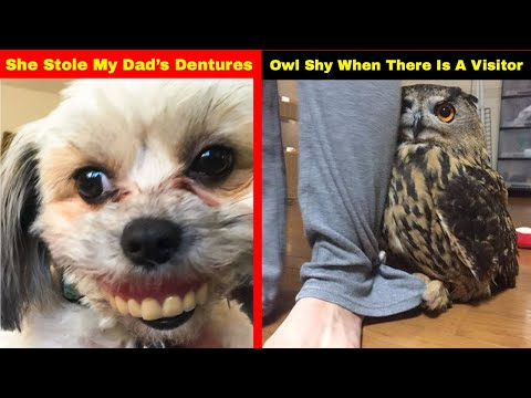 Hilarious Photos That Prove Once You Get A Pet You Will Neve