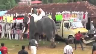 Killer elephant goes berserk, trampling Indians at Kerala festival