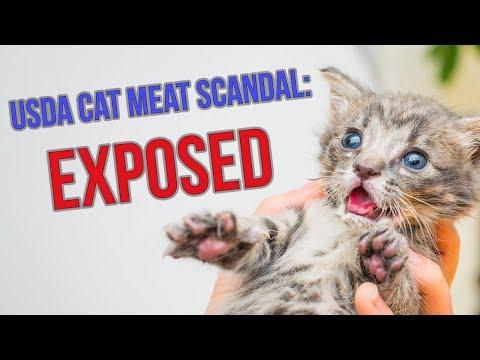 USDA Cat Meat + Kitten Killing Scandal: EXPOSED