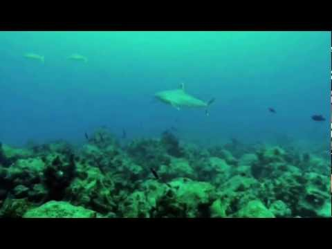 Pilot Fish Introduced By Dr. Georg Martin