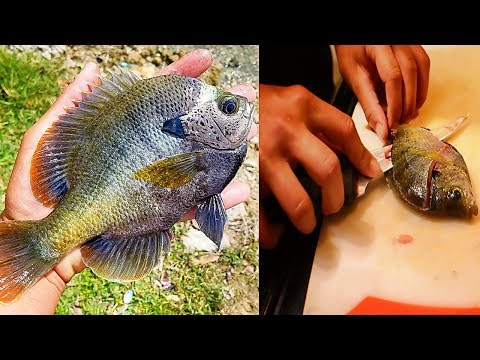 Panfish Catch and Cook!  Delicious Bluegill!