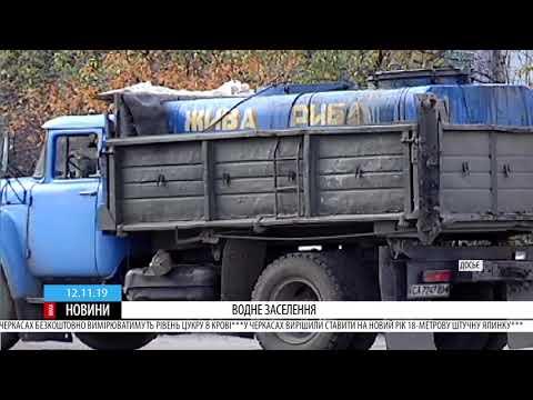 ТРК ВіККА: Дніпро біля Канева поповнили 600 кілограмами товстолоба