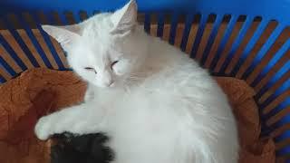 А у нас сегодня кошка родила 4 котят!Котята выросли немножко,а есть из блюдца не хотят!
