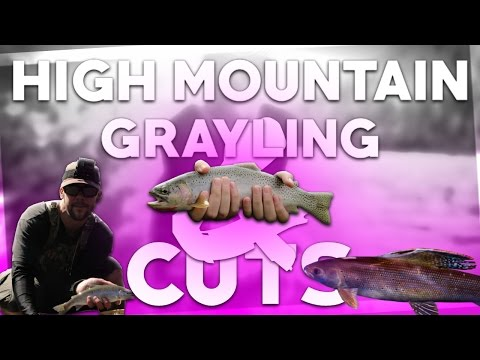 Montana Arctic Grayling & Westslope cutthroat Trout Fishing
